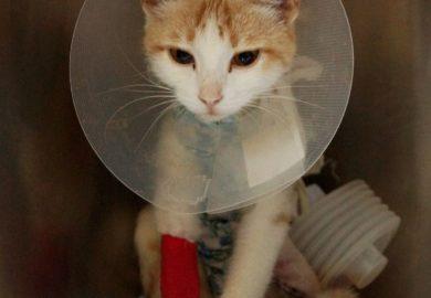 Хронология событий по спасению кошки Лилу