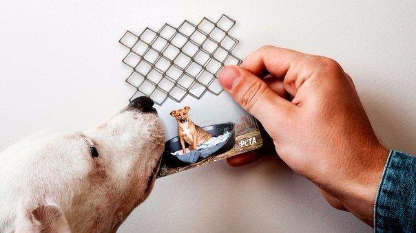 Визитки для активистов PETA