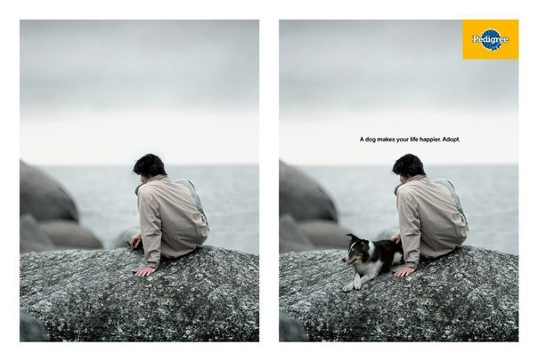 Возьми собаку из приюта. Она сделает твою жизнь счастливее