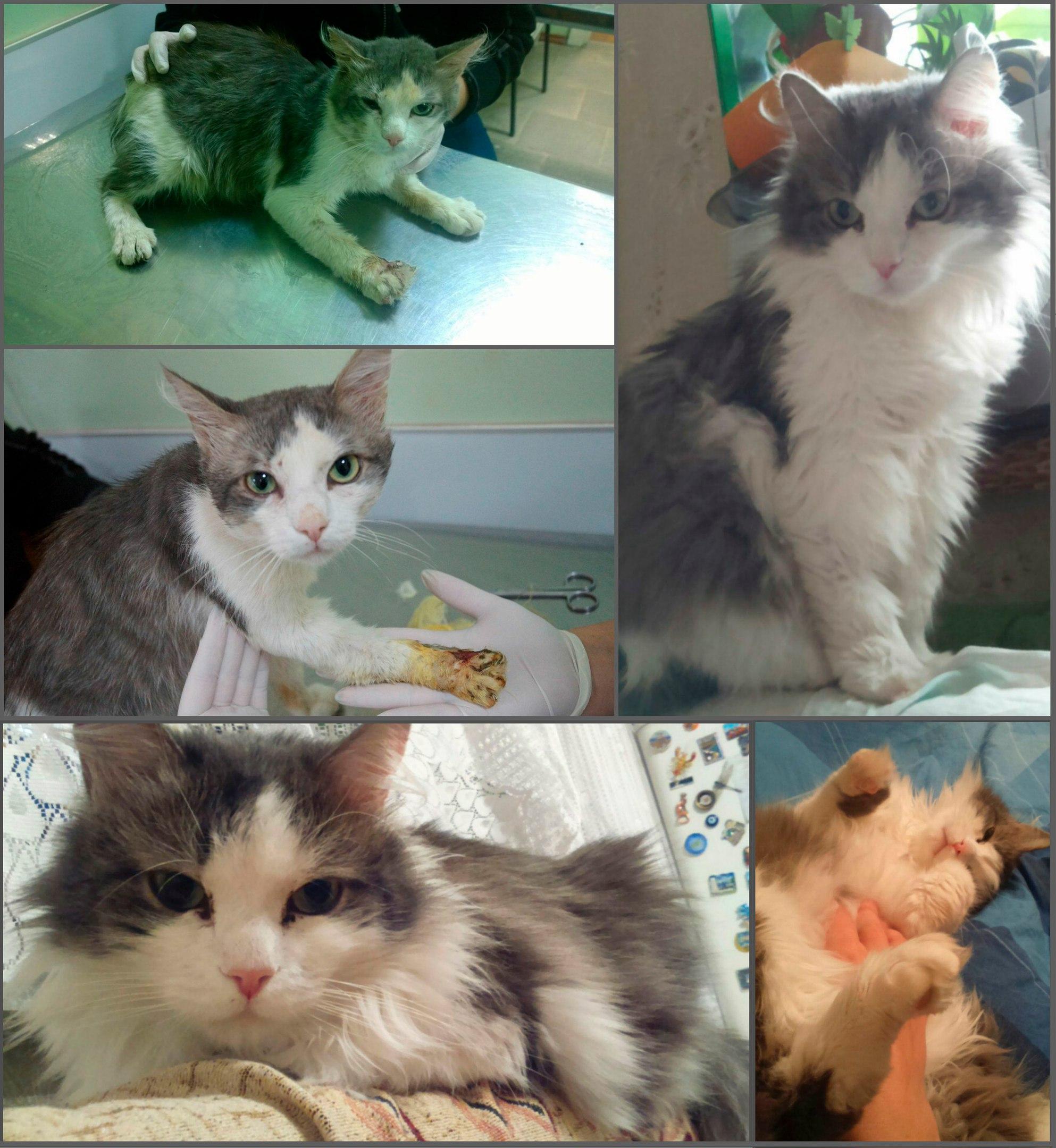 Счастливая история кота Степана
