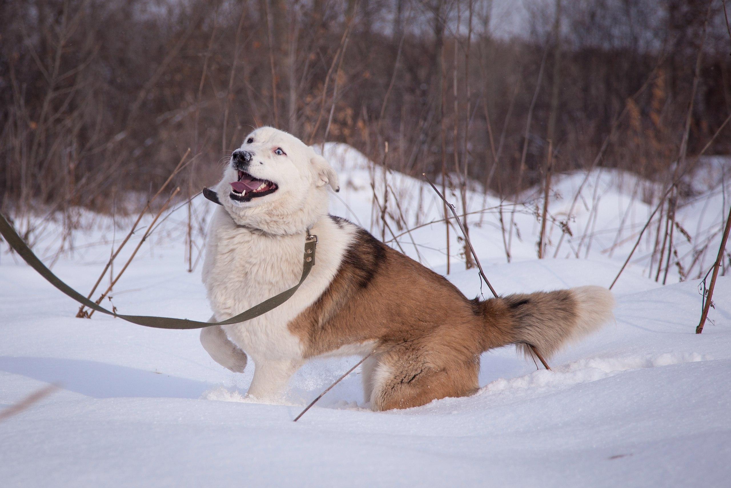 dog_lavina_01