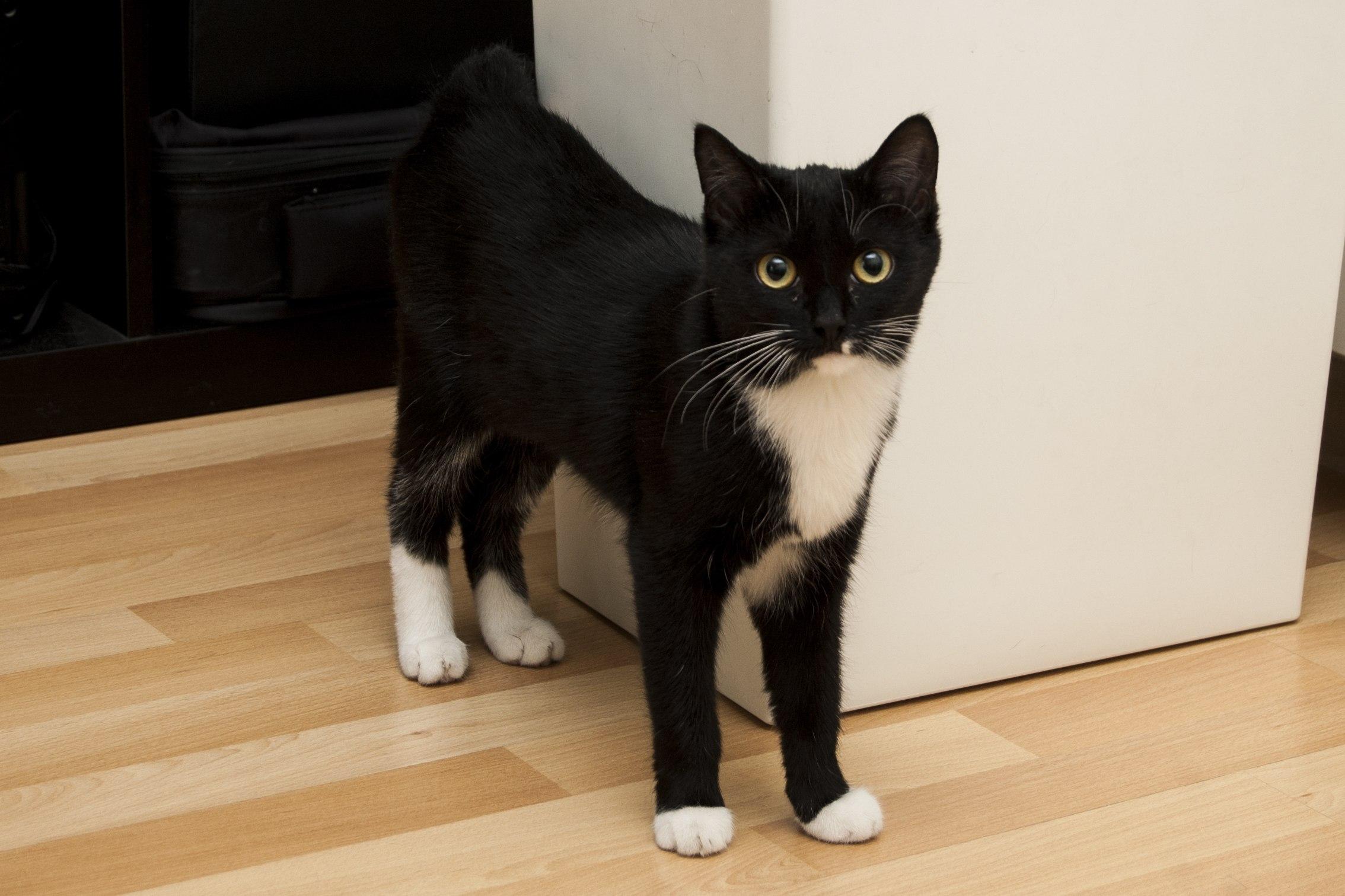 Кошка Малышка нашла дом