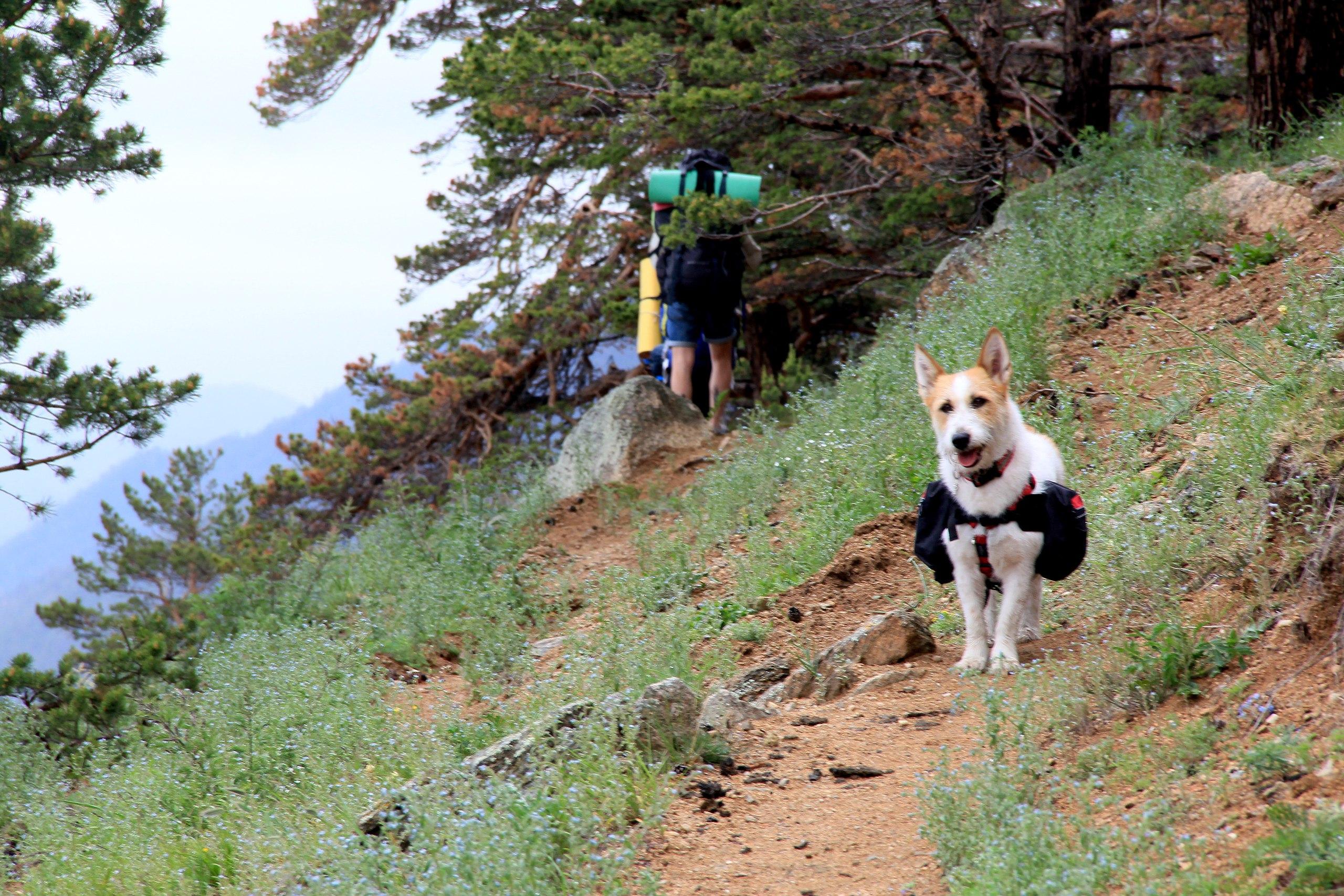 Путешествие с домашним животным
