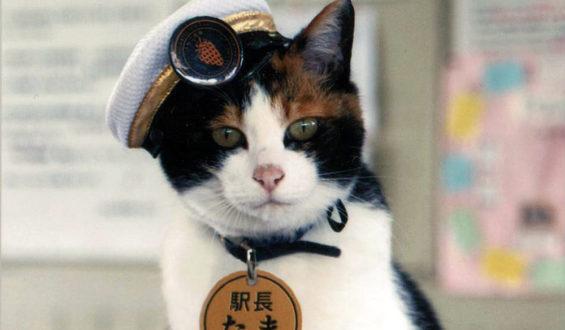 Кошка Тама: путь от станционного смотрителя до вице-президента железнодорожной корпорации