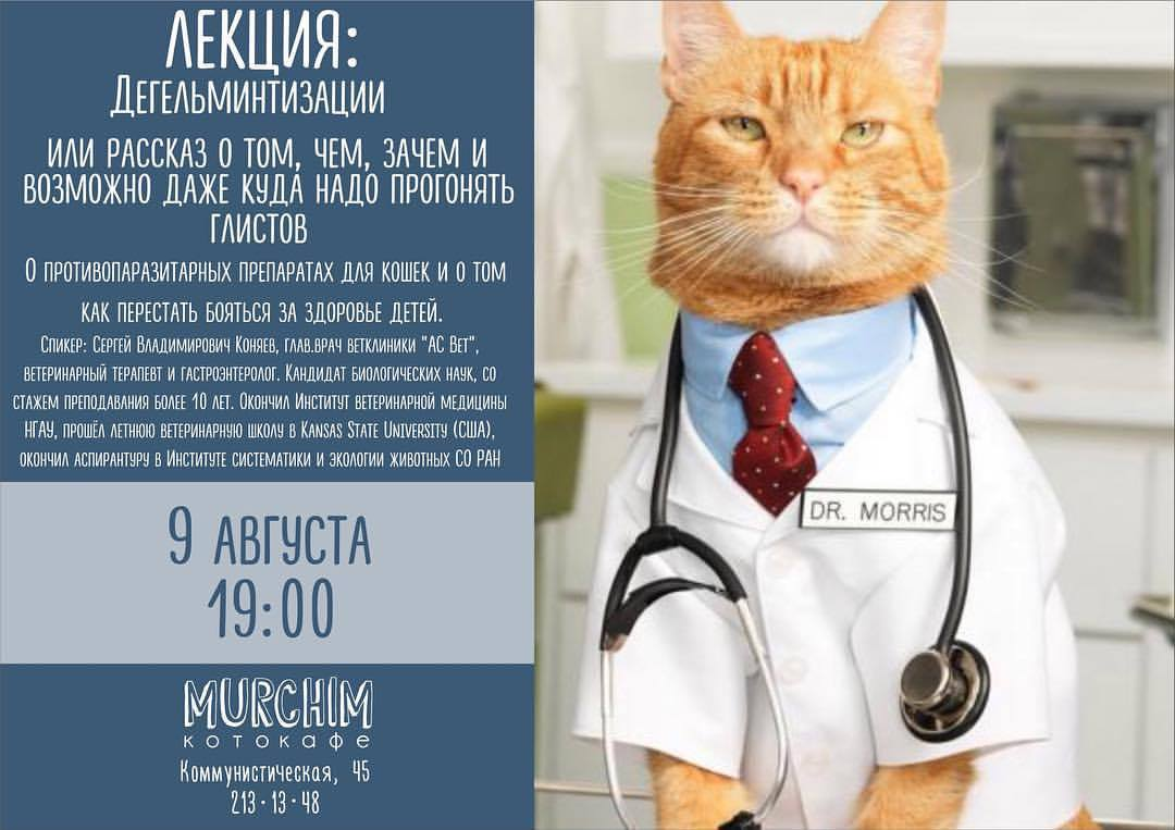 Ветеринарные лекции в котокафе