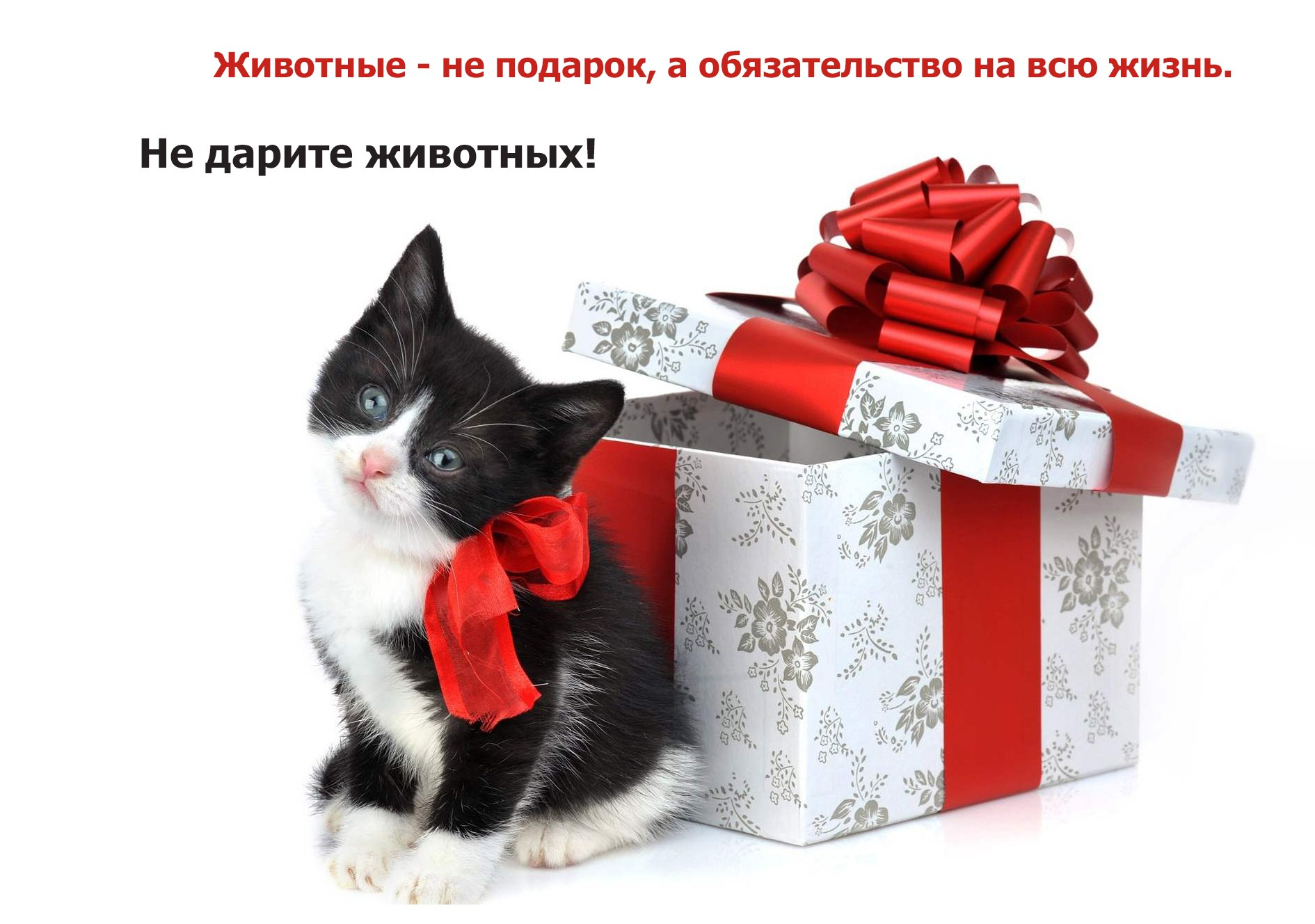 Животные — не подарок