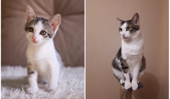 Счастливая история кота Чебурека