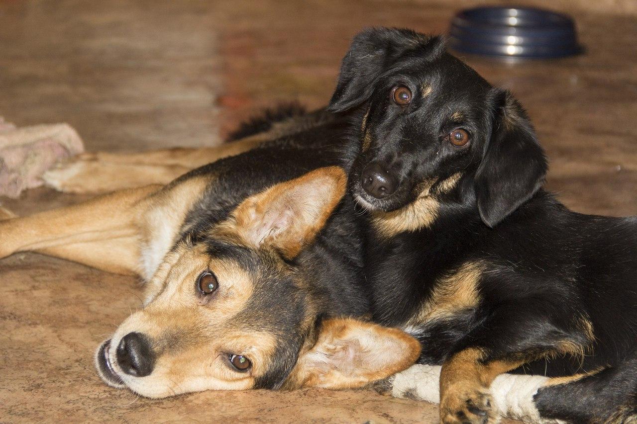 Пост помощи для двух собачек-инвалидов, Найды и Лапки