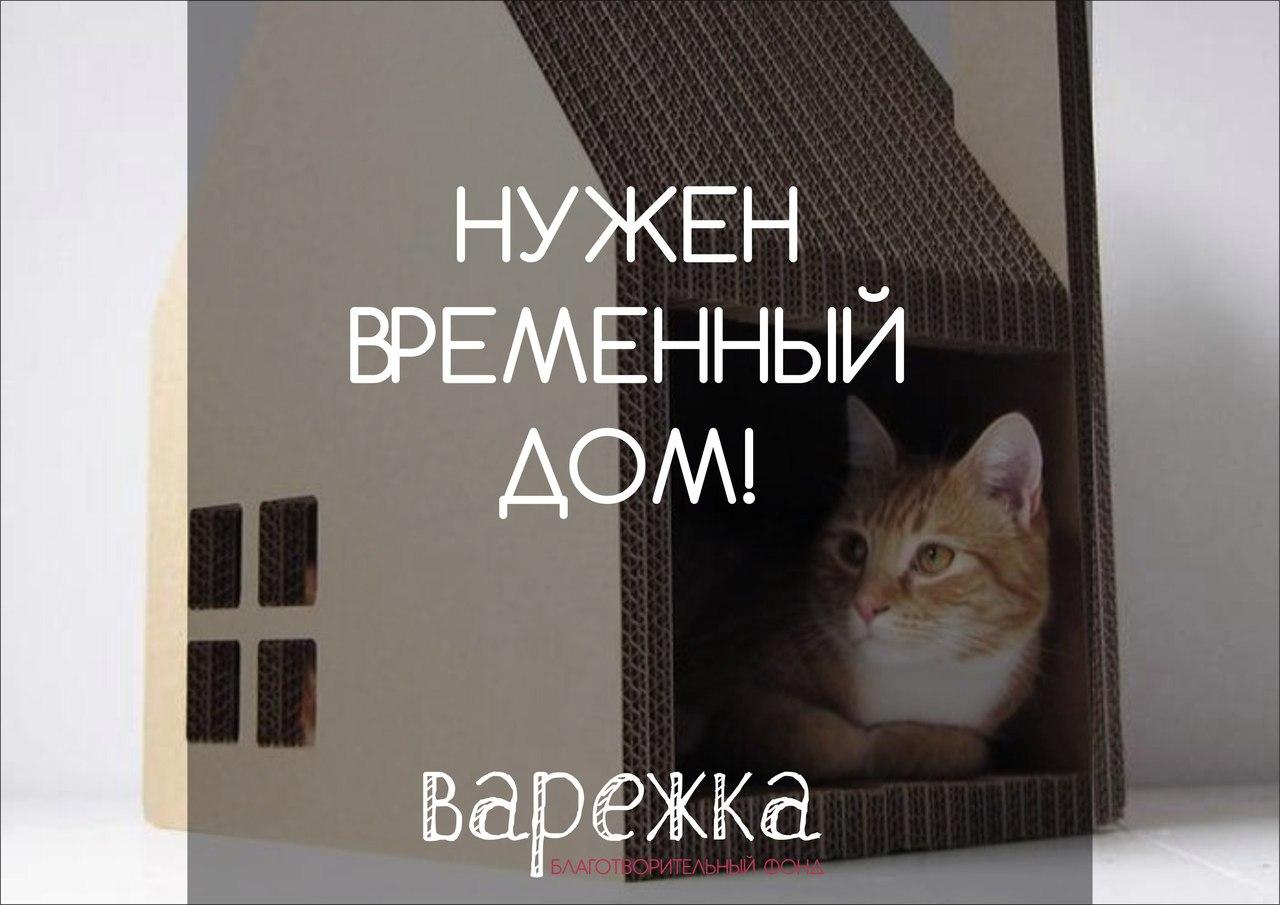 Ищем временный дом для кошки Эльзы