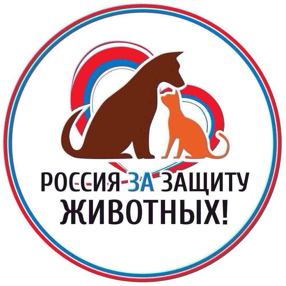 Пикет в поддержку всероссийской акции «Закон нужен сейчас»