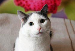 Привет из дома от кота Василия