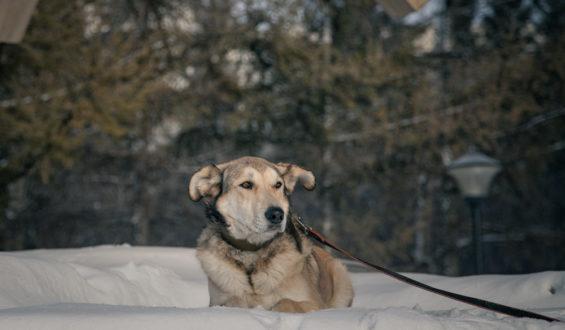 Пёс Йода