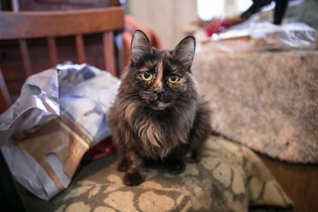 Большие новости о 38 кошках