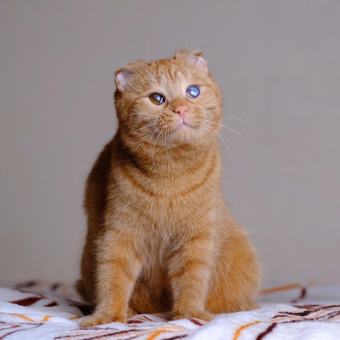 Кошка Брианна