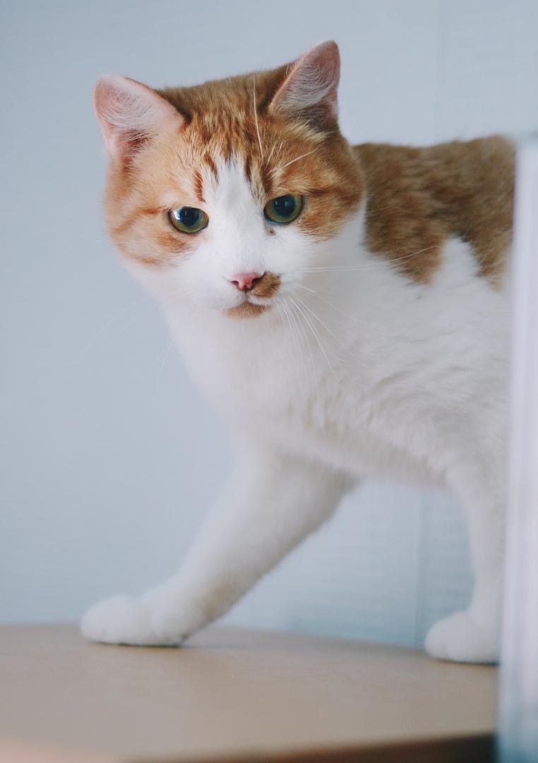 Кот Сусик уже дома