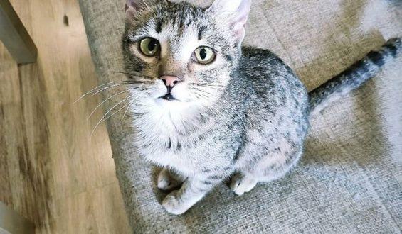 Умерла Тэфия из квартиры 38 кошек