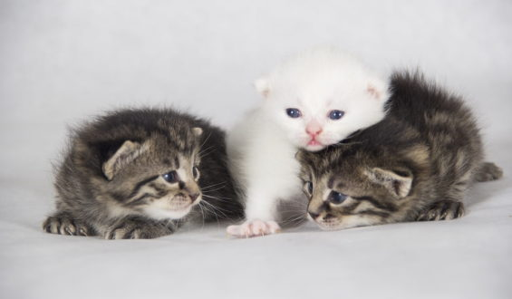 Нужна помощь для 12 котят и 4 кошки-мамы