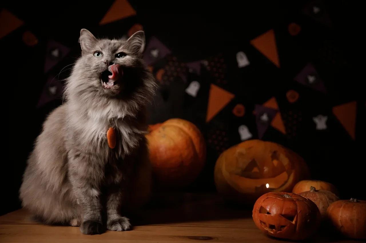 Кошка Лилу уехала домой