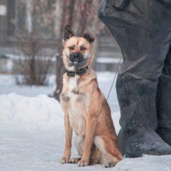 Собака Шанти