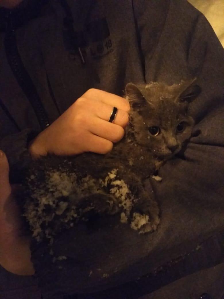 Котенка нашли вмерзшим в сугроб