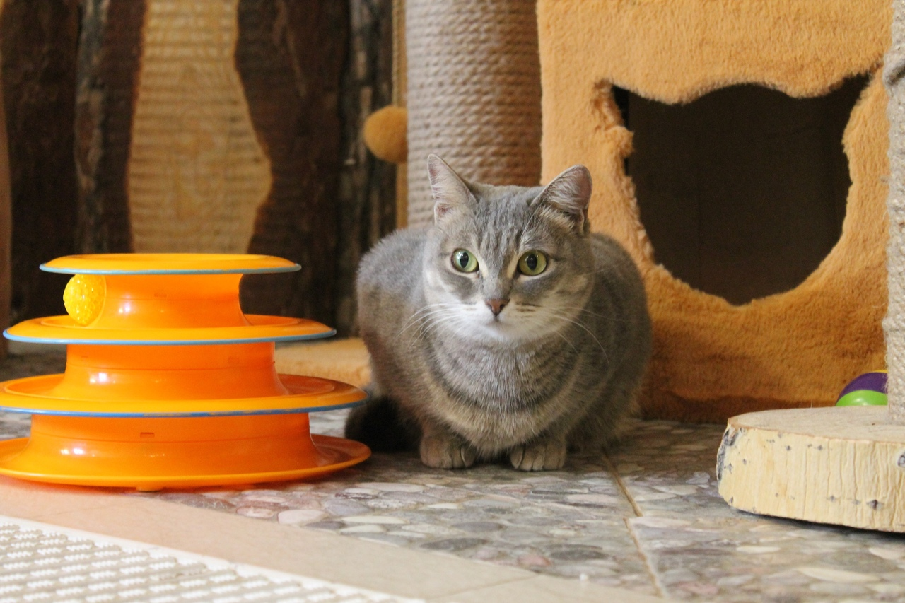 Кошка Ханна уже дома