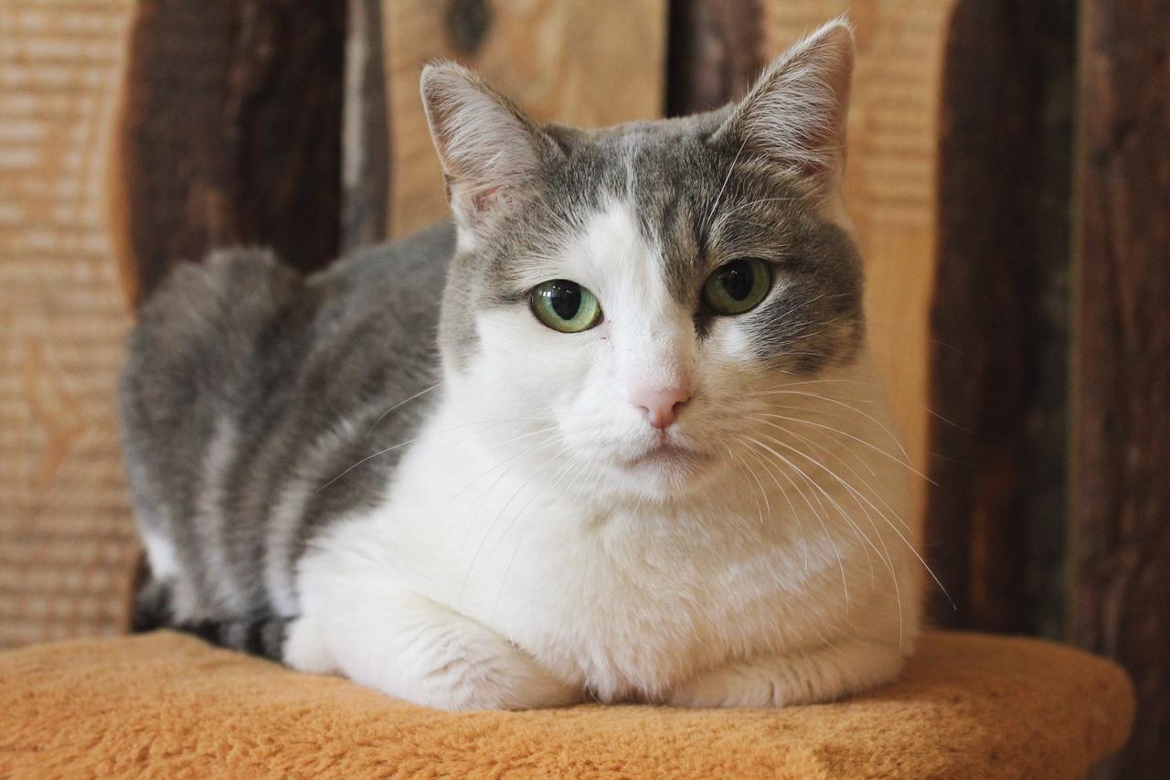 Кошка Мичи