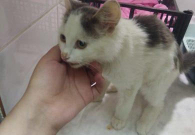 Двухмесячный котенок упал с 9 этажа