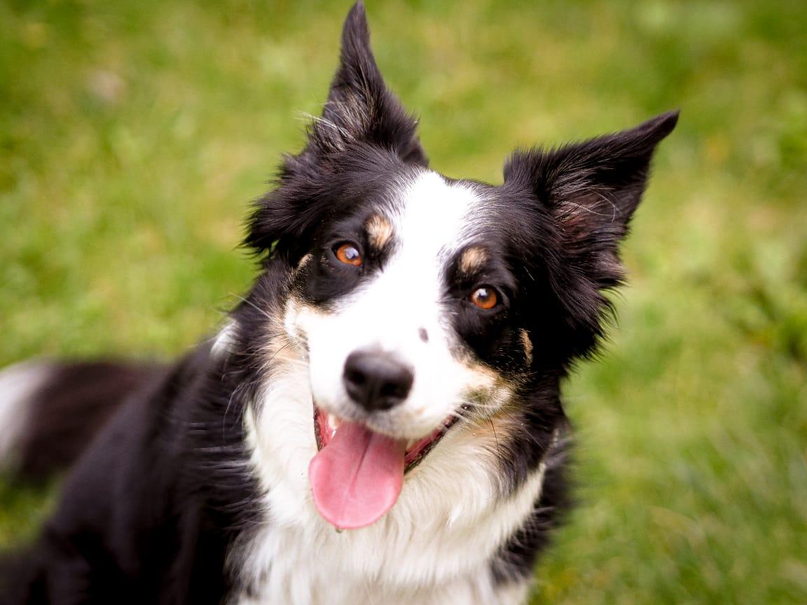 Благотворительный марафон «Собака — трюкач»