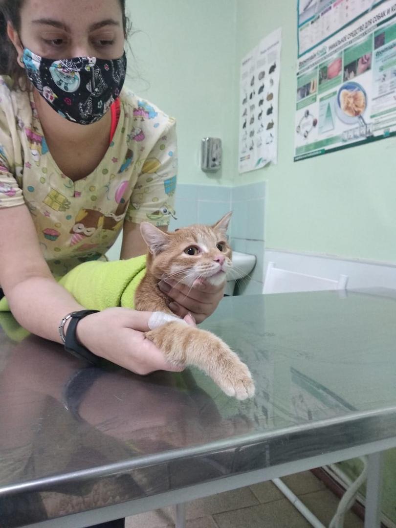 Для Миоши требуются лекарства и корм