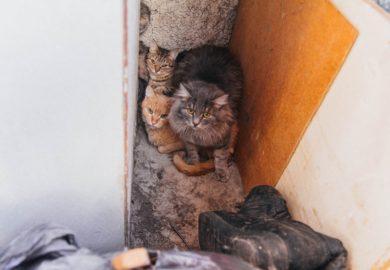 Помогаем кошкам, заселившим квартиру бабушки