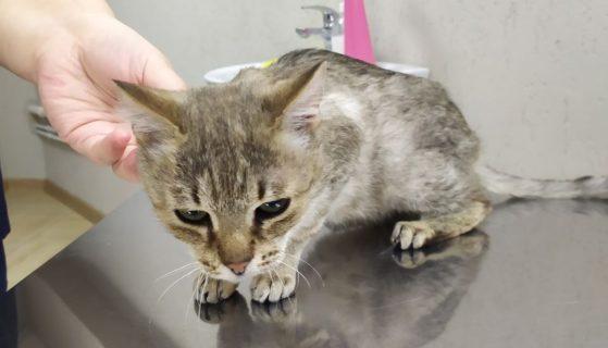 Очередная жертва кошачьего вируса — подросток Финдус