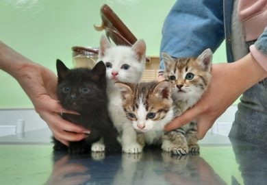 8 новых котят, которым нужна помощь