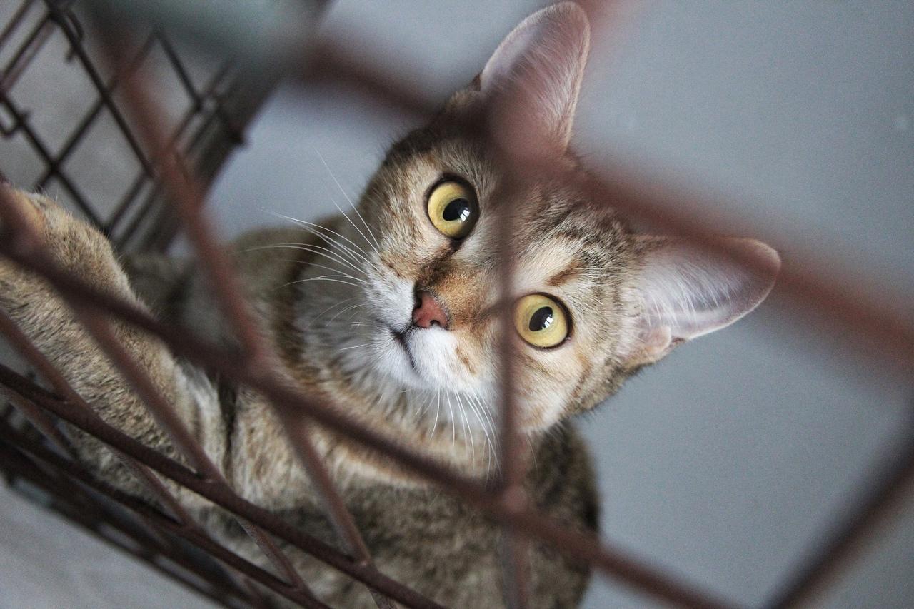 У нас есть тайная кошка Сова